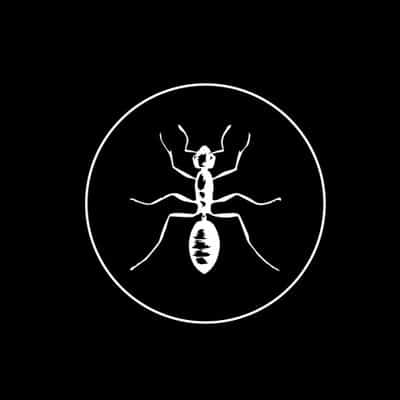 Black Ant NYC logo